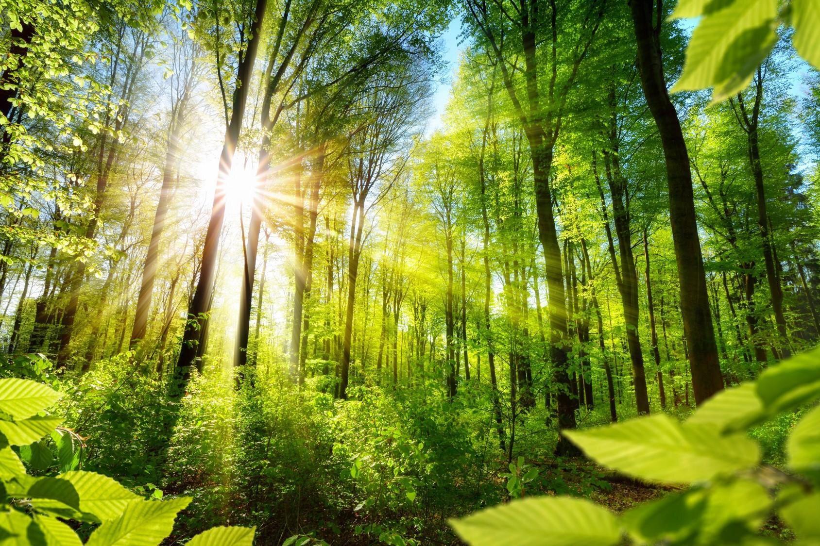 5 anni Carbon Neutrality image2