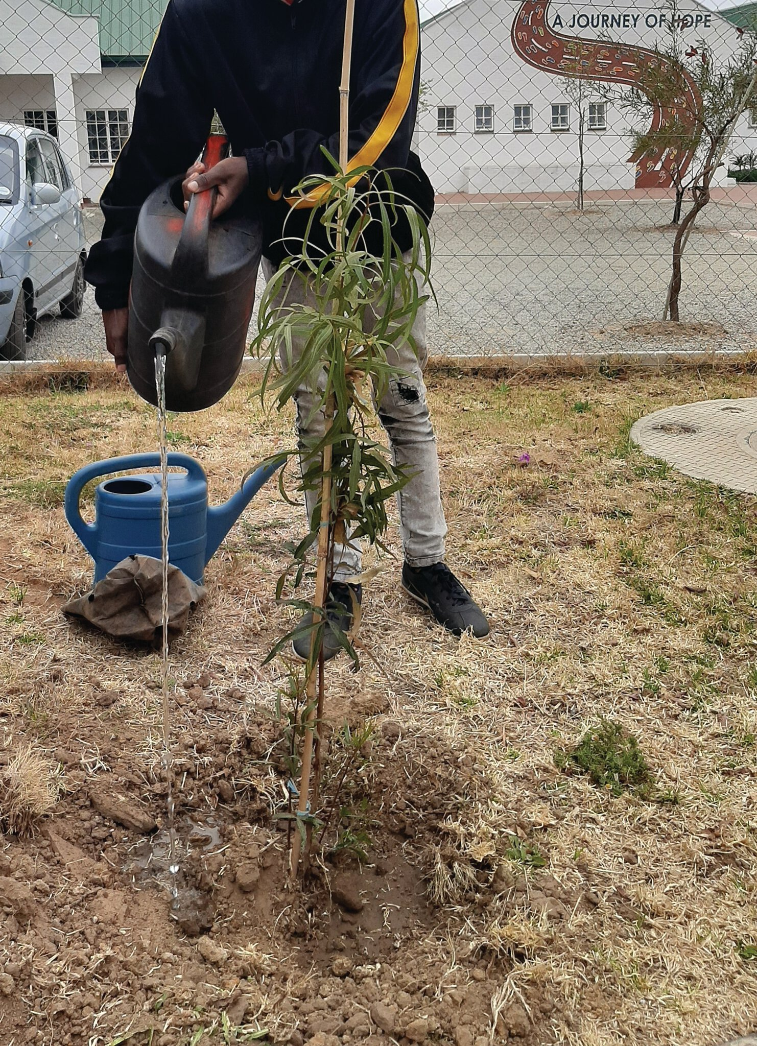 NOKHUPILE tree plant arbor day Sep 2020 two